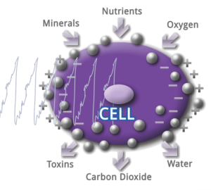 PEMF-cell