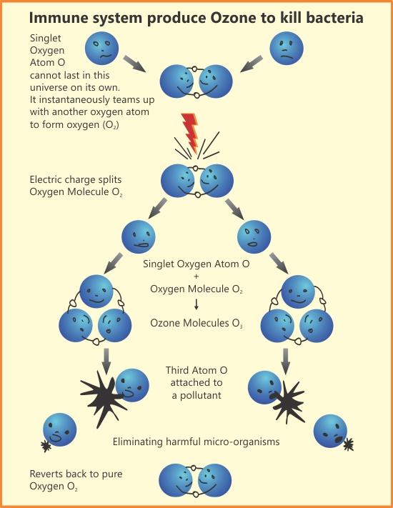 Immune system produce Ozone to kill bacteria